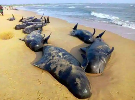 Whales Washed Ashore